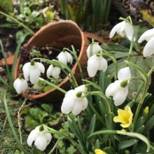snowdrop gardens at Offcote Grange