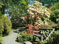 Lea Rhodedendron Gardens